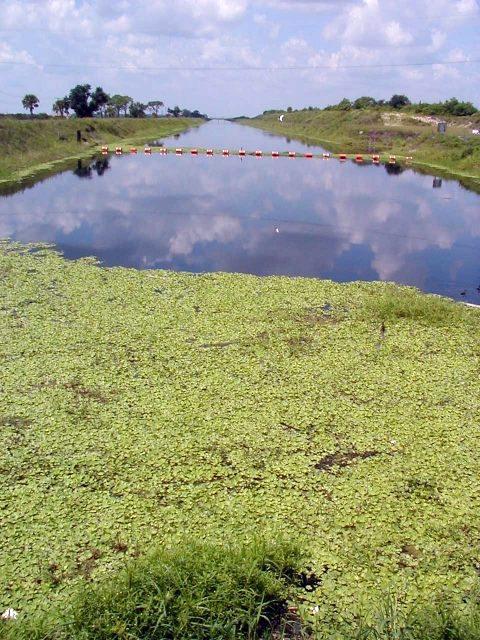 Vista de la Laguna Indian River en Florida, Estados Unidos. (foto tomada de http://trec.ifas.ufl.edu/kwm/research/indian_river_lagoon.shtml)