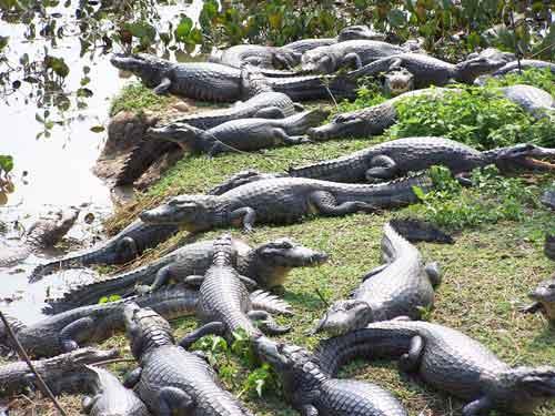 El blog de Nature Conservancy plantea los pros y contras del ecoturismo. (tomado de blog.nature.org)