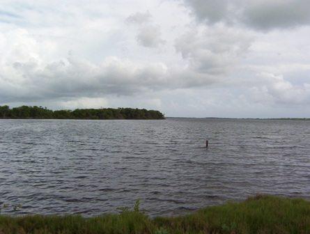 Estuario de la Bahía de Jobos (Guayama-Salinas, Puerto Rico)