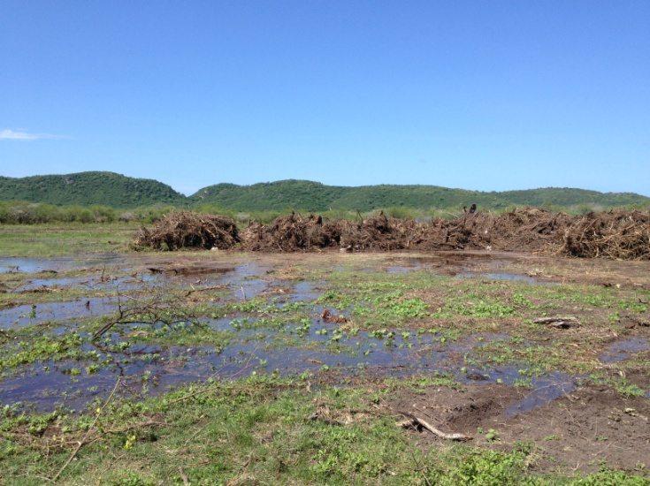 Parte de los humedales que comprenden la Laguna de Guánica. (fotos suministradas)