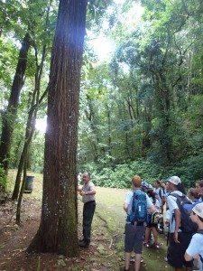 Niños participantes del campamento de verano del DRNA aprendiendo sobre la flora y fauna en un bosque. (foto por Carlos J. Cruz)