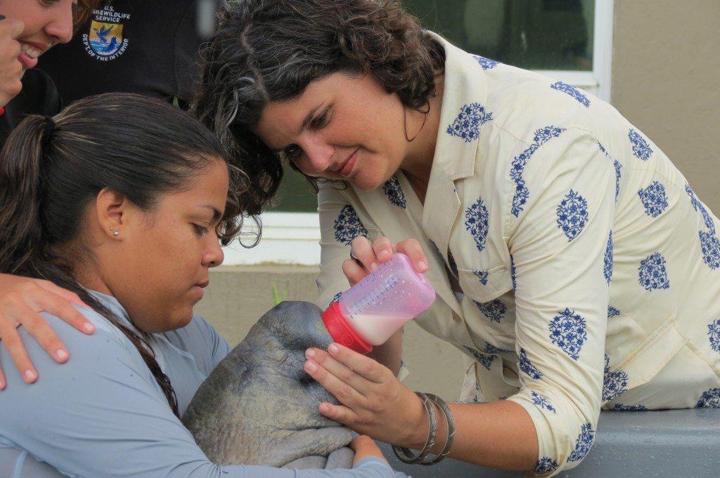 La Secretaria de Recursos Naturales y Ambientales, Carmen R. Guerrero Pérez, alimenta a Yuisa, la manatí de un mes y medio Yuisa rescatada en Piñones. (fotos suministradas por el DRNA)