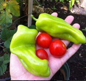 Al comprar en mercados orgánicos apoyas a familias que prosperan de manera independiente. (foto Marielisa Ortiz)