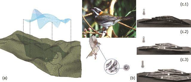 (a) Mapa de relación entre promedio de temperatura y precipitación sobre el Bosque La Olimpia en Adjuntas; (b) Análisis de glándulas sensitivas de los pájaros a cambios de temperatura y humedad relativa; (c.1) Posición inicial del prototipo sensible a temperatura, (c.2) Reacción del prototipo al incremento de temperatura, (c.3) Posición final del prototipo al aumento de temperatura sobre la superficie. Por Glorimar Irizarry