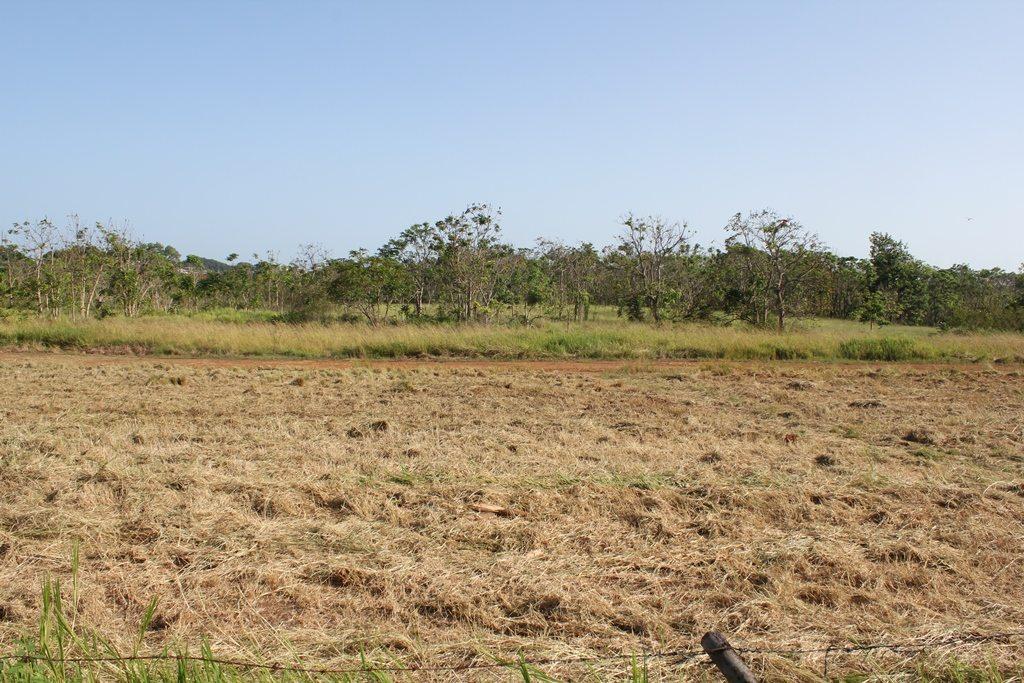 En este terreno se propone desarrollar una planta de