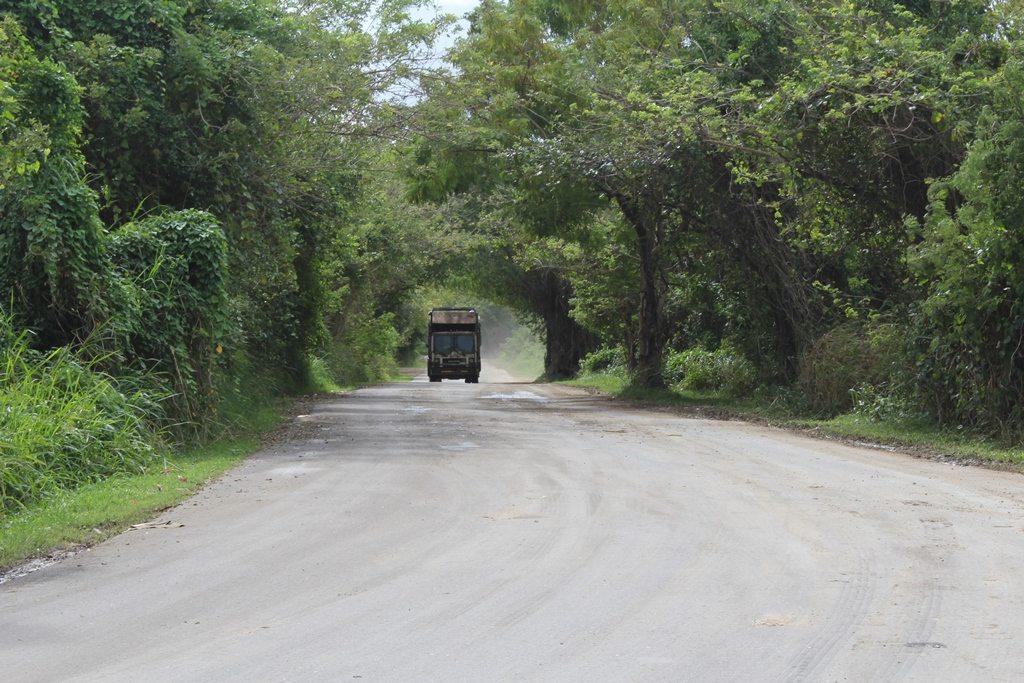 Muchos de los sistemas de relleno sanitario no fueron planificados debidamente y ubican en áreas sensitivas donde habitan especies protegidas o en peligro de extinción, adyacente a humedales, sumideros, cerca de ríos y/o quebradas. Aquí se observa un camión acercarse al vertedero de Arecibo, adyacente a la Reserva Natural del Caño Tiburones. (foto por Marielisa Ortiz)