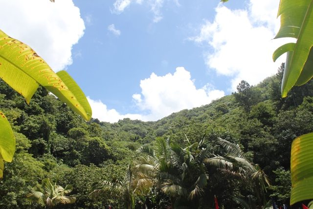 Bosque Escuela Ariel Massol Deyá
