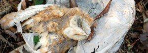 Impacto a vida silvestre documentado en Inglaterra.