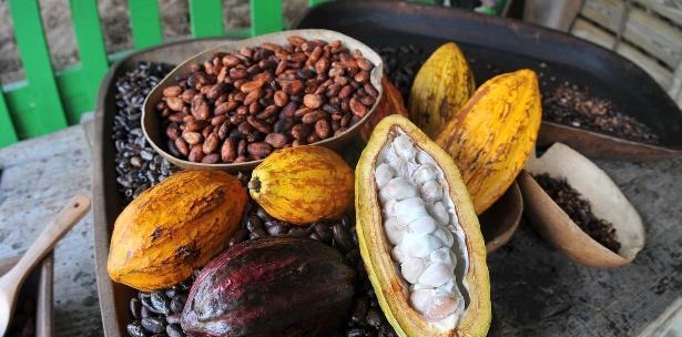 Como parte de los recorridos, habrá visitas al área de cultivo de cacao, donde uno de nuestros intérpretes compartirá la importancia del árbol de cacao y explicará cómo ayuda a mejorar el hábitat de la fauna del bosque, así como en el mantenimiento de sus comunidades ecológicas. (fotos suministradas)