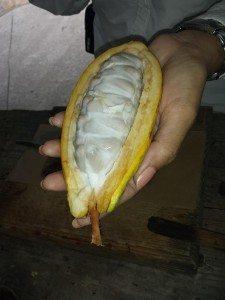 El cacao es el protagonista del 11 al 21 de marzo en la Hacienda Buena Vista, en Ponce.