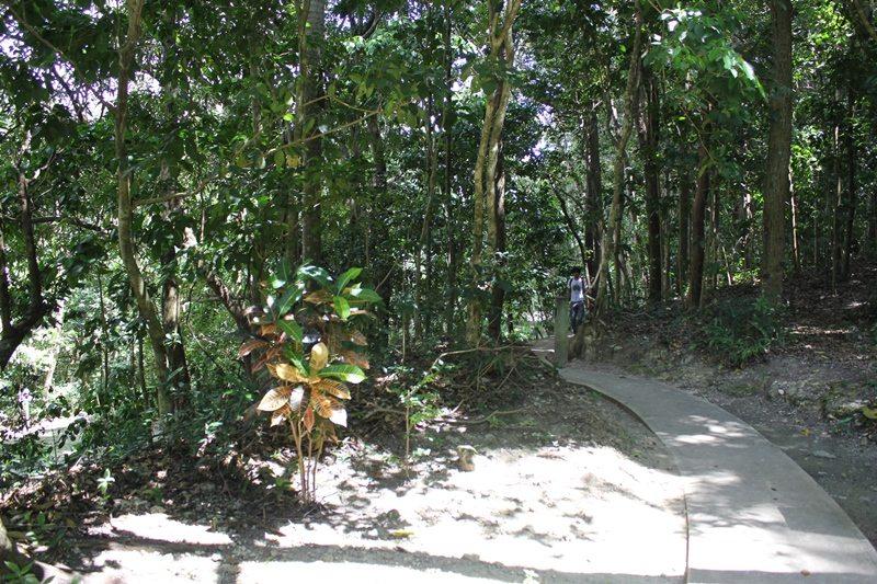 El simposio se realizó en  el Bosque Santa Ana, ubicado dentro del Parque Julio Enrique Monagas, en Bayamón.