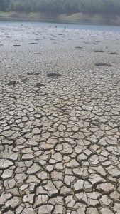 Foto de sequía en La Plata - Copy