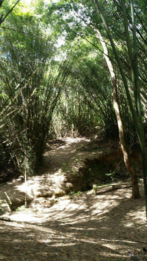 El Bosque Estatal de Monte Choca está ubicado en Corozal.