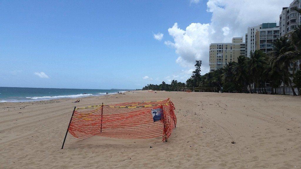 Nido de tinglar protegido en el área de San Juan.