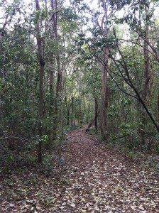Vereda en el Bosque Estatal de Cambalache. (fotos por Marielisa Ortiz)