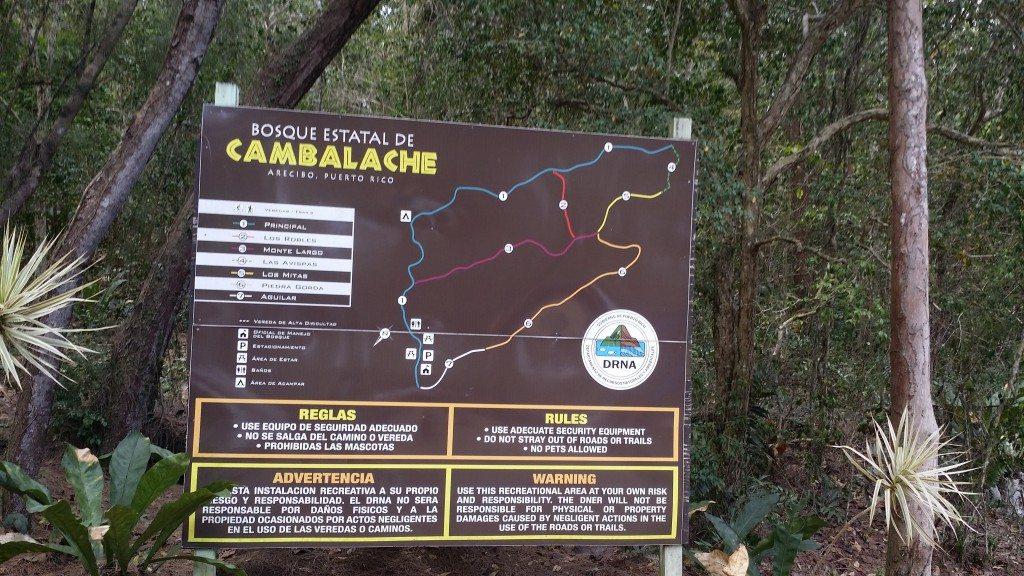 En el Bosque Estatal de Cambalache en Arecibo hay veredas diseñadas para ser recorridas por ciclistas.
