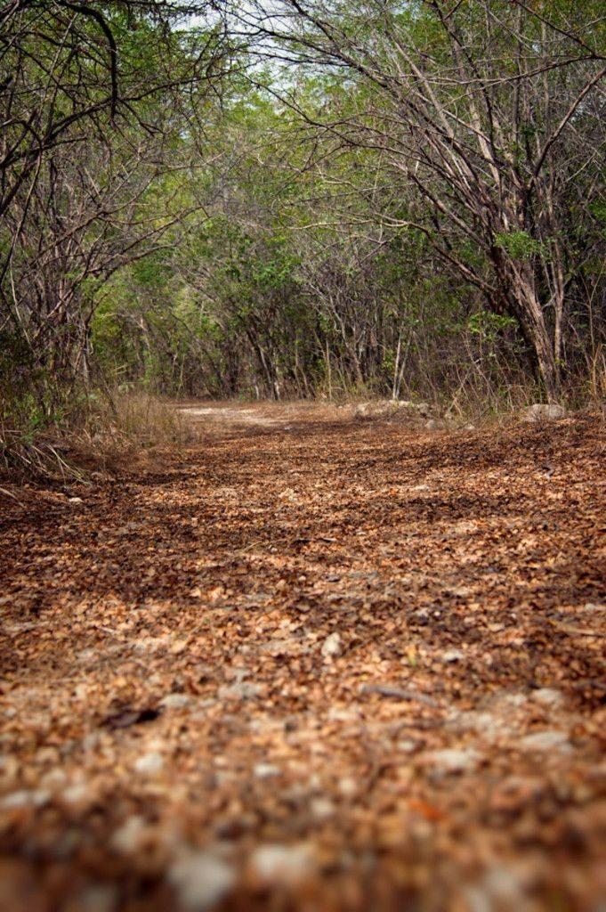 Bosque Seco de Guánica, por www.boriken365.com, vía Pinterest