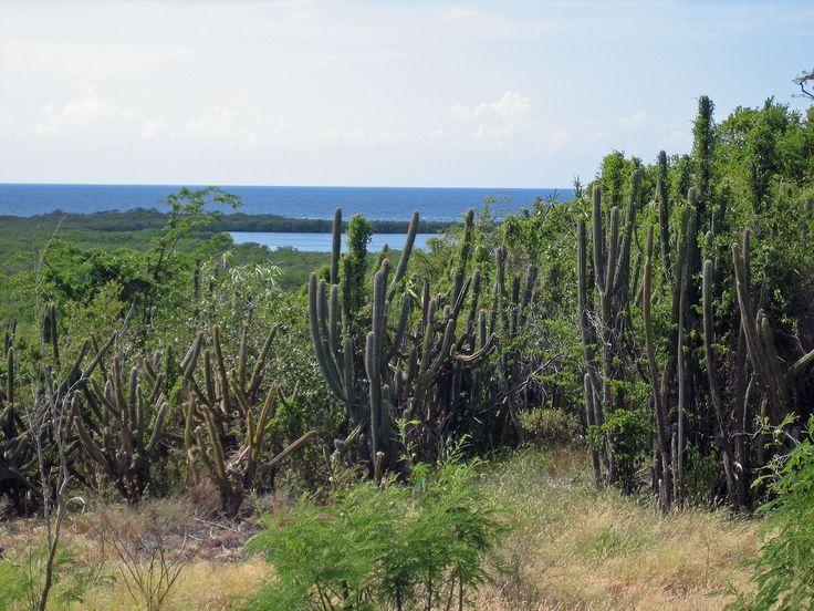 Bosque Seco de Guánica, www.combatebeach.com, vía Pinterest