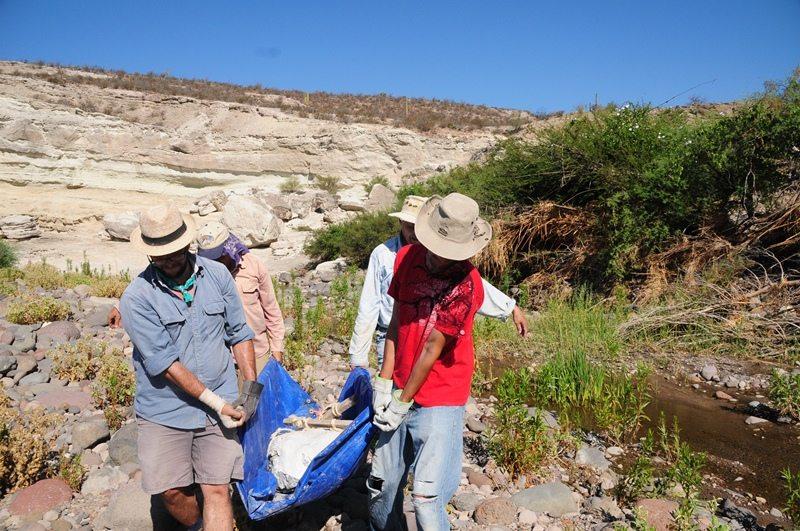 En Baja California Sur transportando la chaqueta con el cráneo de sirenio de una excavación al vehículo. Junto con Fernando Salinas (camisa roja), el Dr. Gerardo Gonzalez Barba (camisa peach) y el Dr. Daryl Domning (camisa azul claro).