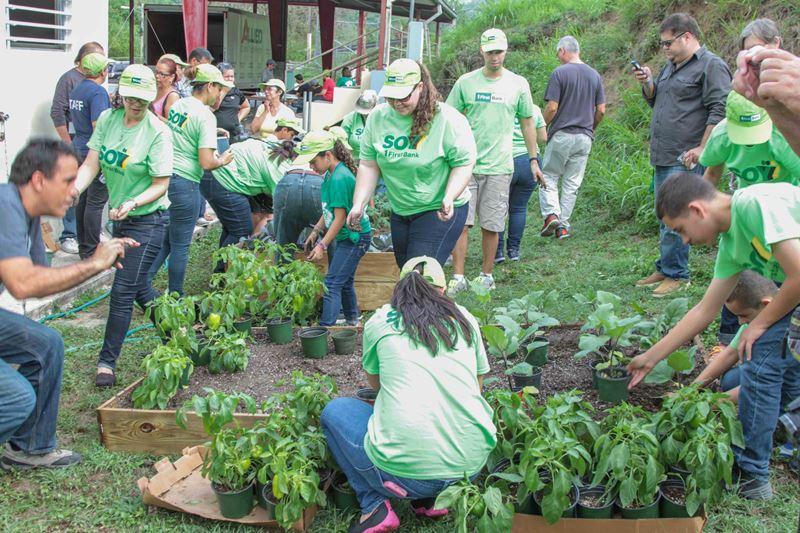 Voluntarios de FirstBank y miembros de la comunidad Sector Primitivo del Barrio Quebrada en Yauco construyen el huerto urbano.