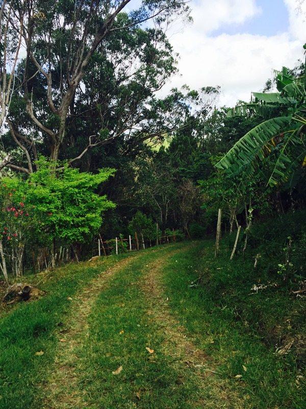 La finca se encuentra en el barrio Jájome Alto de Cayey.