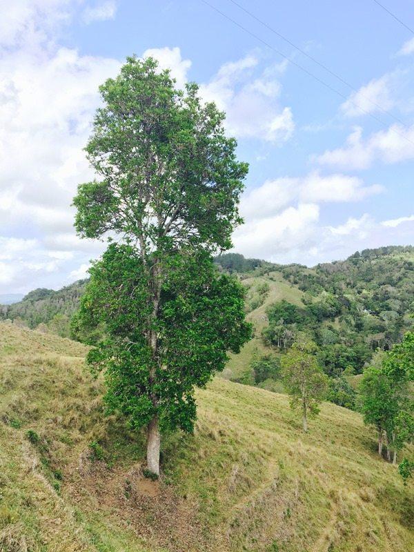 La finca de 262 cuerdas, fue adquirida sin planes de desarrollo para así lograr la conservación íntegra de las tierras.