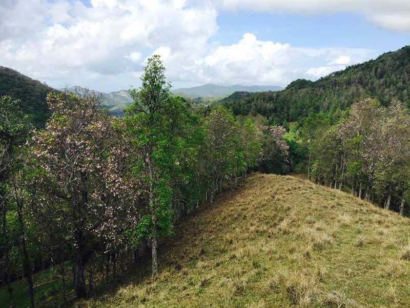 La finca de 262 cuerdas, fue adquirida sin planes de desarrollo para así lograr la conservación íntegra de las tierras. (fotos por Víctor R. Fuentes López)