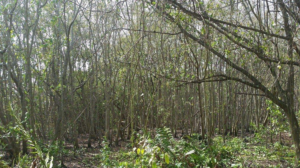 La Ciénaga Las Cucharillas ubica en Cataño y se extiende a través de 1,272 cuerdas entre los municipios de Cataño, Guaynabo, Toa Baja y Bayamón. (fotos suministradas)