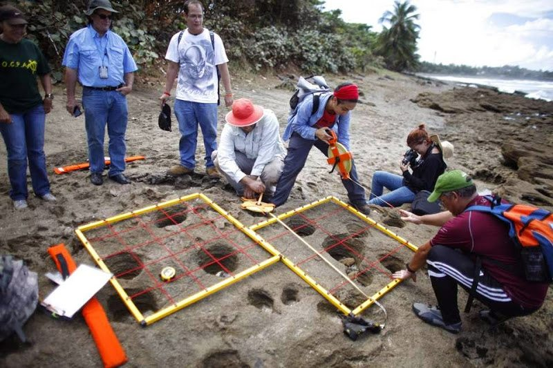 Investigación de arqueología en la Hacienda La Esperanza en Manatí. (fotos suministradas)