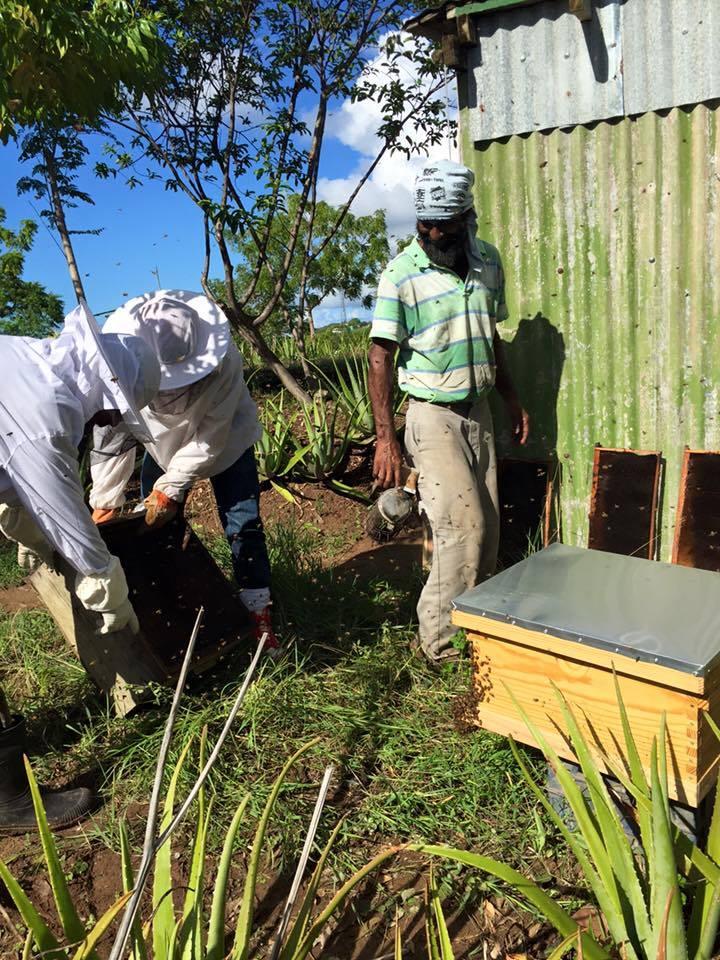 Jorge Cora llevando a cabo uno de sus talleres sobre apicultura en la Finca Conciencia.