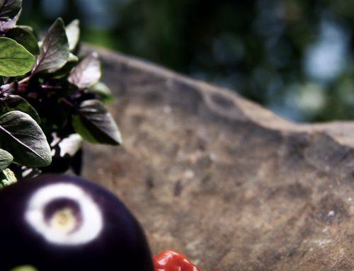 Estrena en línea documental que resalta la agricultura urbana en la isla