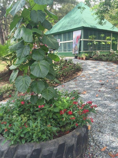 Área del mariposario en el Bosque Estatal de Susúa, en Sabana Grande. (fotos suministradas)