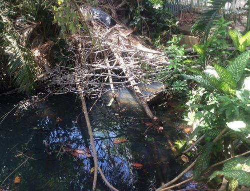 La realidad de la quebrada Mongil en San Juan