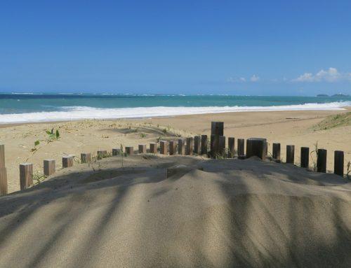 DRNA apoya designación de la Reserva Natural Playa Grande El Paraíso, en Dorado
