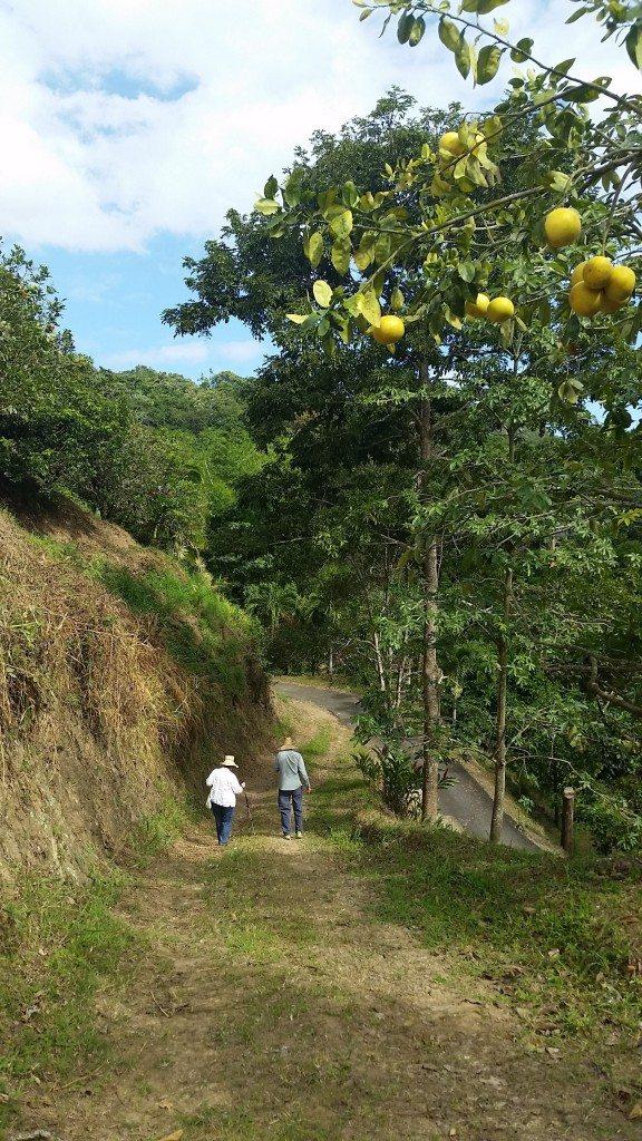 Este proyecto es subvencionado por el Servicio Forestal del Departamento de Agricultura de Estados Unidos (USDA) para su programa de Custodio de Bosques Privados. (suministradas)