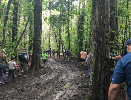 Los beneficios de hacer senderismo en un bosque