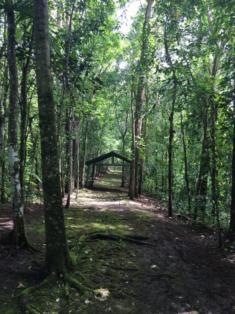 Vereda Frank H. Wadsworth, en el Bosque Estatal de Río Abajo.