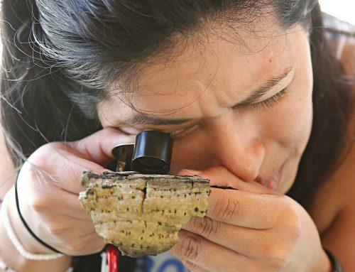 Científicos descubren nuevas especies de hongos en Área Natural Protegida Cañón San Cristóbal
