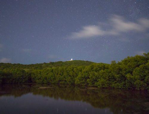 Protejamos la bioluminiscencia de nuestras acciones