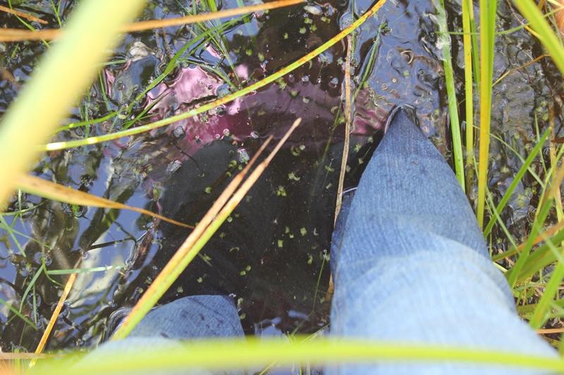 Caminar por el humedal con el agua hasta las rodillas fue una gran experiencia de conexión con nuestra Madre Tierra.
